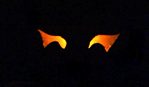 Spooky Eyes In The Bushes, from SimpleSolutionsDiva.com