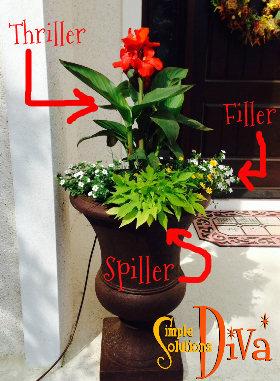 The Thriller, Filler & Spiller Strategy for Planting Containers, from SimpleSolutionsDiva.com.