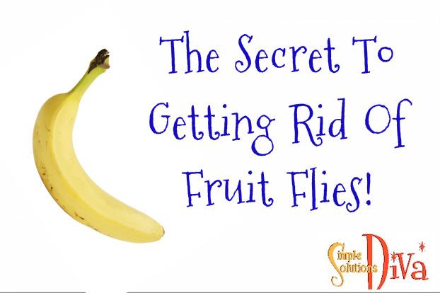 easy healthy fruit tart recipe how to get rid of fruit flies