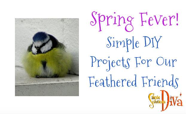 SSD Bird Projects