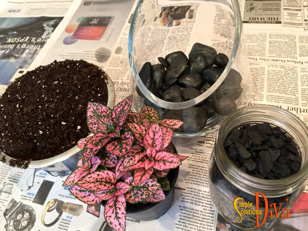 All You Need For A Terrarium: Charcoal, rocks for drainage, a beautiful bowl, soil, and a plant perfect for your lighting conditions!