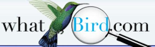 What Bird Logo