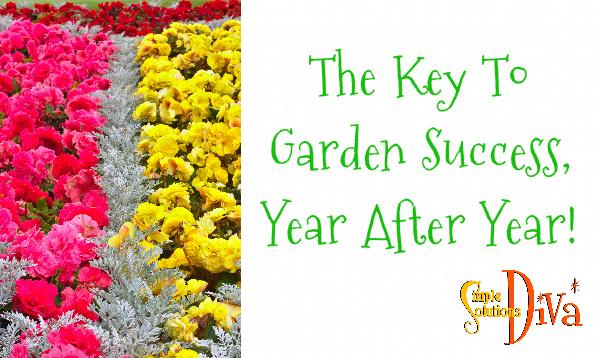 SSD Garden Success