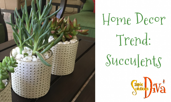 Home Decor Succulents